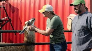 So Hard To Say Goat-bye thumbnail