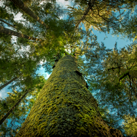 Looking Up by Darren Sutherland - Nature Up Close Trees & Bushes ( china beach )