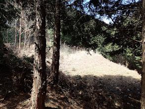 唐突に林道出合い
