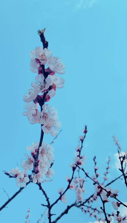 Un cielo di fiori di anita_zanni