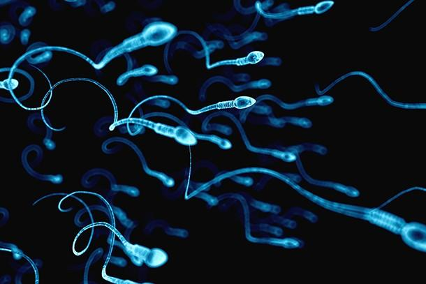 Image result for sperm testing at home