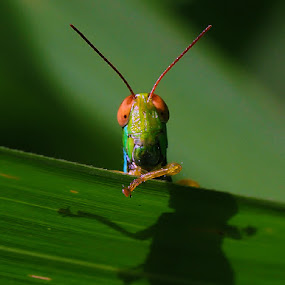 HAI by B Iwan Wijanarko - Animals Insects & Spiders