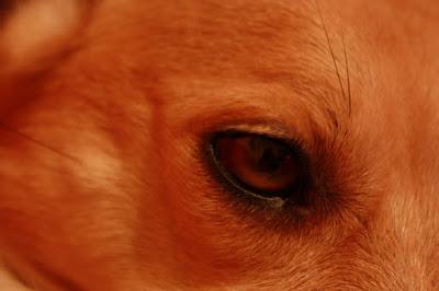 L'occhio! di Diego