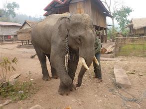 Photo: Teď slona čeká koupel.