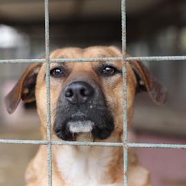 Shelter Dogs by Suzana Svečnjak - Animals - Dogs Portraits ( pets, shelter, dogs, animals )