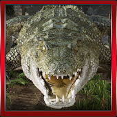 3D Crocodile Game