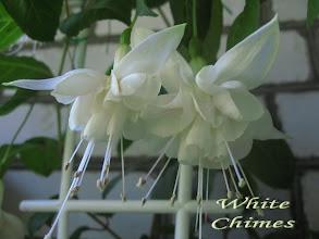 Photo: White Chimes