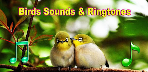 Birds Sounds & Ringtones - Apps on Google Play