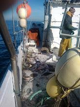 Photo: Buena pesca!. 14 cajas de jibias.