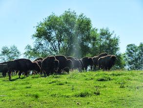 Photo: Day 9 Fruitland ID to Meridian (near Boise) ID 60 miles 2000' climbing: Idaho Farmland, this farmer also had herd of Buffalo