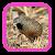 เสียงนกคุ้มอืด file APK Free for PC, smart TV Download