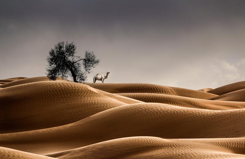 Dune sinuose di Pensatore