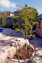 Photo: Plantings surrounded by stone need to be carefully chosen since it will be much warmer - Paul's Scarlet Hawthorn is bulletproof and lovely.