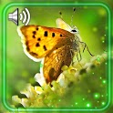 Butterflies Collection icon