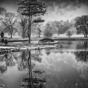 Lone Tree by Bruce Thiel - Black & White Landscapes (  )