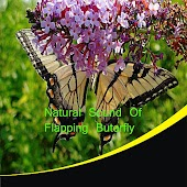 Natural Sound of Flapping Butterfly