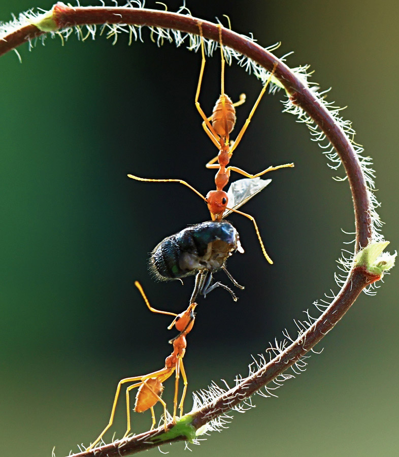 Lunch.. by Ricky  Firmansyah - Animals Insects & Spiders
