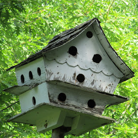 Bird House by Debra Rebro - Buildings & Architecture Decaying & Abandoned