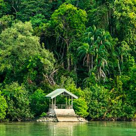 Mangroves  by Laxminarayan Channa - Nature Up Close Trees & Bushes