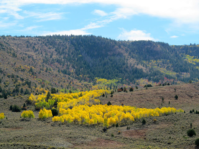 Yellow aspen trees at upper Soldier Creek