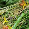 unidentified slugs