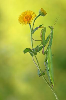Nel giallo.... di www.fioregiallophoto.it