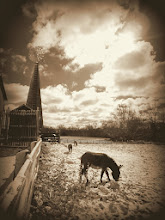 Photo: Sepia photo of a donkey under a windmill at Carriage Hill Metropark in Dayton, Ohio.