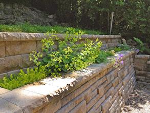 Photo: This back yard slopes steeply toward the house. We used this stunning wall to push back the hill and make the back yard more useable.