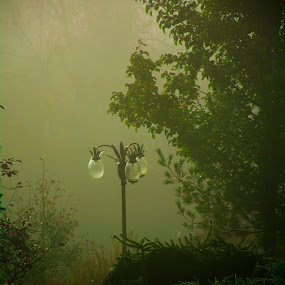 Misty Morning by Kaushik Mitra - Nature Up Close Leaves & Grasses