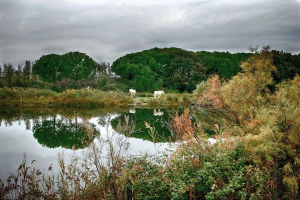 Autunno sul delta di Fotodiale