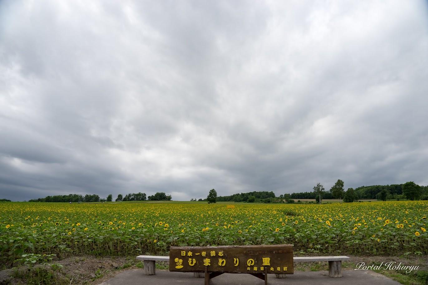 北竜町ひまわりの里(ひまわりパークゴルフ場近く)