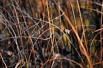 Photo: Great Dismal Swamp- Virginia