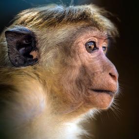thoughtful by BO LED - Animals Other Mammals ( monkey, closeup, nature, animal, portrait, wildlife,  )
