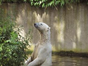 Photo: ... und macht sich gaaanz lang im Wasser ;-)