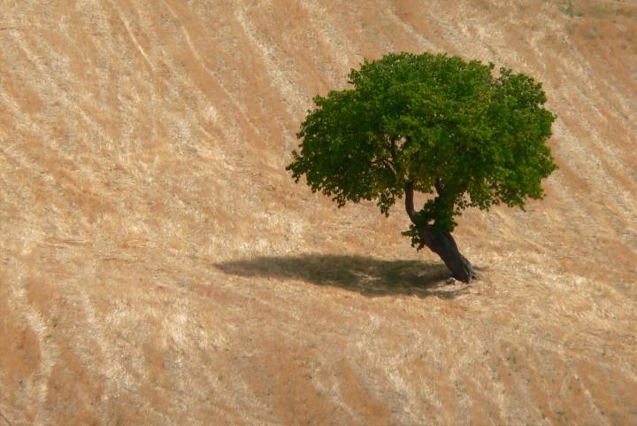 Alberobello di carlo fierro