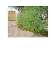Photo: SEN-UR2 vetiver as garden ornmental plant at a home in Senega