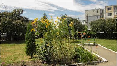 """Photo: """"Mărită-mă mamă"""" (Rudbeckia laciniata 'Hortensia') - din Turda, Calea Victoriei, Parcul Bisericii Ortodoxe din Microraion 3 - 2019.07.09"""