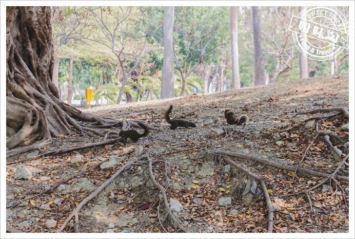 中央公園松鼠