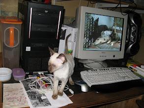 Photo: Makoto loopt heel graag over het bureau, lekker veilig