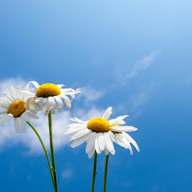 Spring flowers by Robert  Płóciennik - Flowers Flower Gardens ( spring, sky, beautiful, flowers, flower )