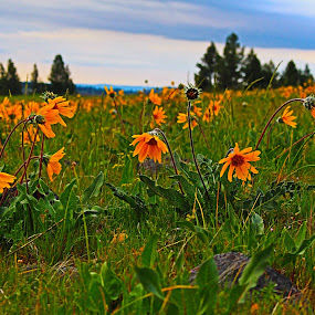 by Traci Corwin - Flowers Flowers in the Wild