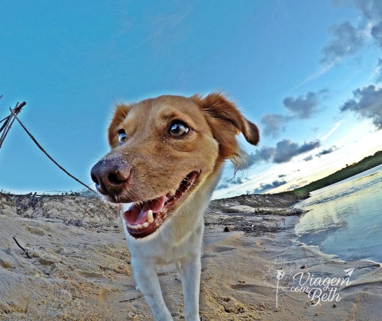 Foto dog - nina dog na praia
