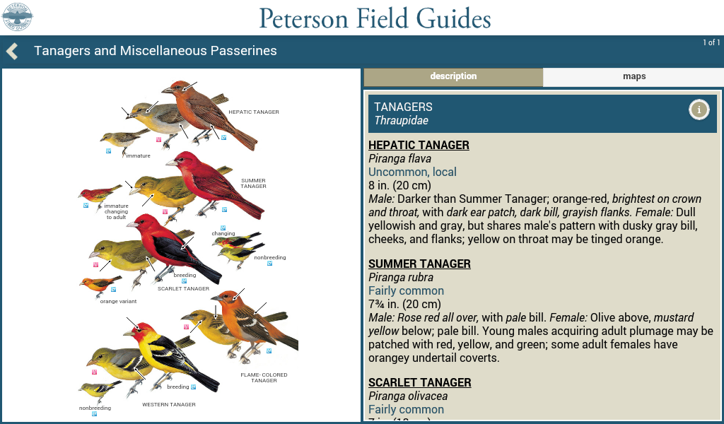 Peterson Birds North America- screenshot