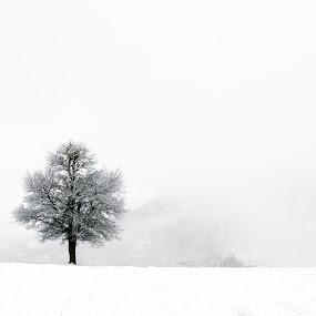 last tree by Yılmz Doğn - Landscapes Travel ( last tree, view, white, tree, winter, cold, landscape )