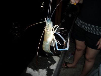 how to catch prawns with rod