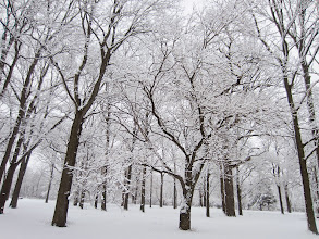 Photo: Snowy trees at Eastwood Park in Dayton, Ohio.