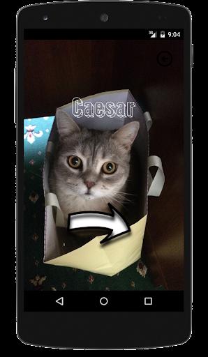 Beliebte Katzennamen