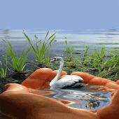 Swan Illusion Live Wallpaper