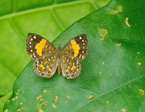 Photo: Unidentified Butterfly