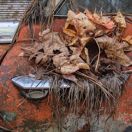 Seasons Come and Go by Gwen Paton - Transportation Automobiles ( automobile, georgia, car, junk, abandoned,  )